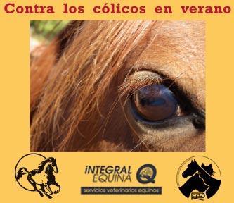 Contar los Colicos en verano. Manual de Consejos veterinarios y nutricionales para cuidar a tu caballo