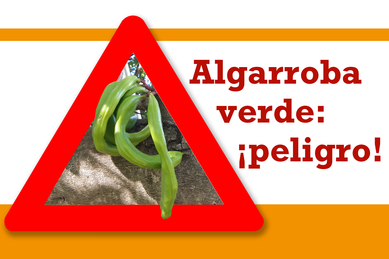 Algarroba verde: ¡peligro!