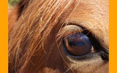 Contra los cólicos en verano: consejos veterinarios y nutricionales para cuidar a tu caballo