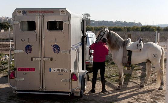 El van y el caballo