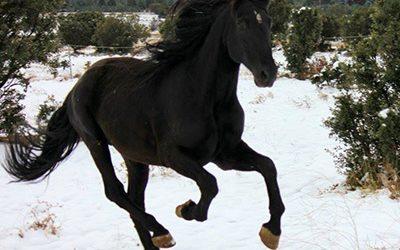 La alimentación del caballo en otoño e invierno