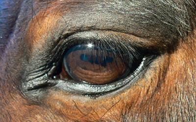 La Vitamina A en los caballos