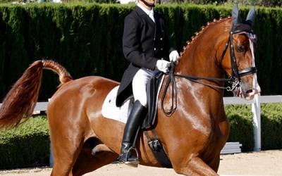 Suplementos nutricionales para caballos