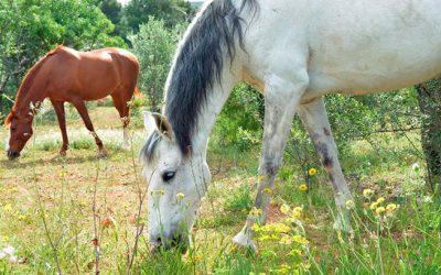 Alimentación de los caballos en primavera