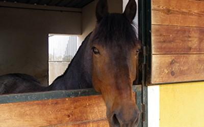 Consejos para cuidar a nuestros caballos cuando hace frío