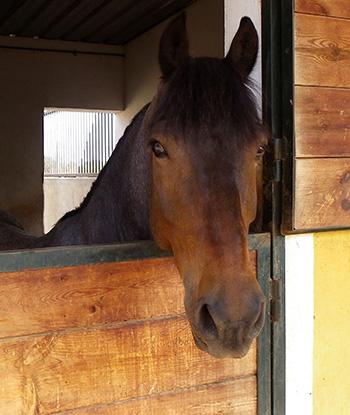 caballo-asomado