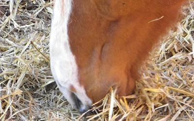 Sobre la saliva de los caballos