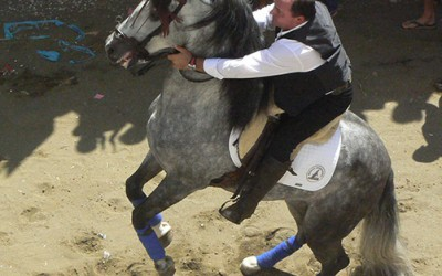 La alimentación y el comportamiento del caballo