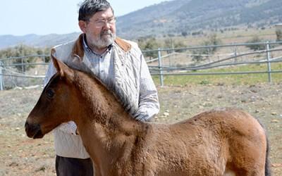"""Marcelino González Alfaro, criador de caballos PRE: """"El caballo es movimiento"""""""
