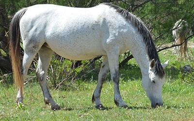 Reforzar el sistema inmunológico del caballo a través de la nutrición