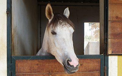 Problemas de salud y comportamiento de los caballos relacionados con los vicios de cuadra