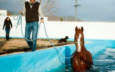 """Miguel Pedro Gaspar, Equicare: """"El caballo necesita libertad, compañía y masticar 18 horas diarias"""""""