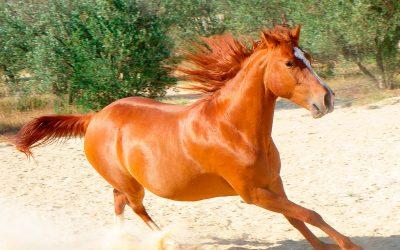 Cuidados del caballo durante una ola de calor